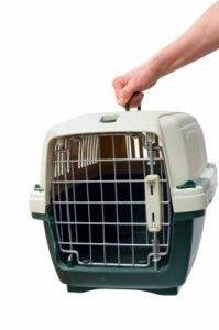 Transporte de mascotas en vehículos
